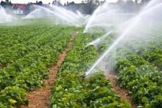 Utilisation de l'eau en irrigation de maraichage