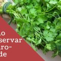 Conservar cheiro verde