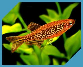 Аквариумные рыбки: 1000 видов с названиями, фото и описанием