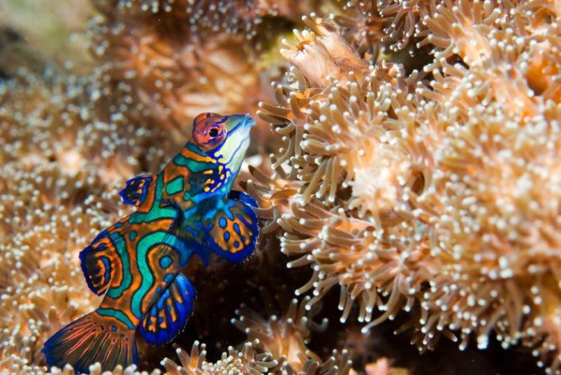 INDONESIA-FISH1
