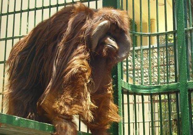 الحيوانات في اندونيسيا