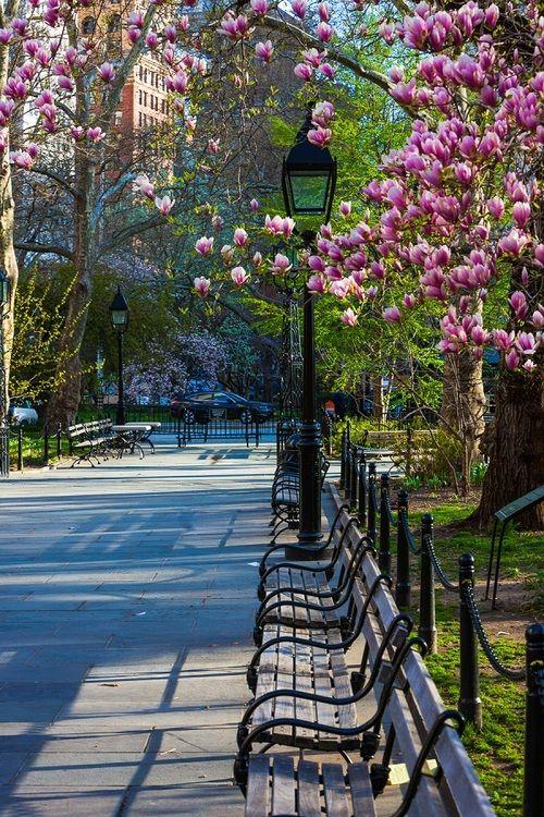صور حديقة نيويورك