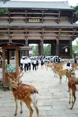 نارا اليابان , Nara