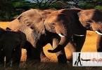 السياحة فى كينيا