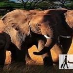 6 من أفضل أماكن للزيارة في كينيا