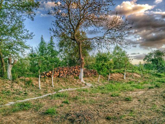 حديقة بلغراد