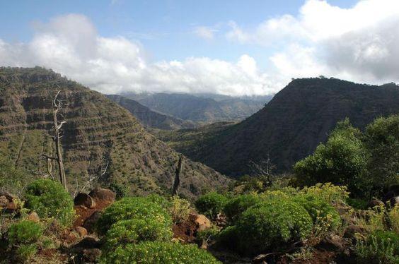 حديقة الغابات الوطنية