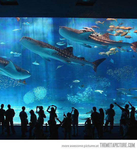 حوض أسماك أوكيناوا