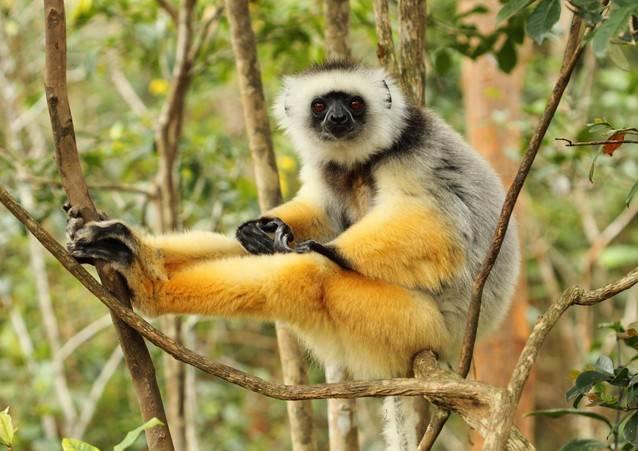 الغابة الاستوائية مدغشقر