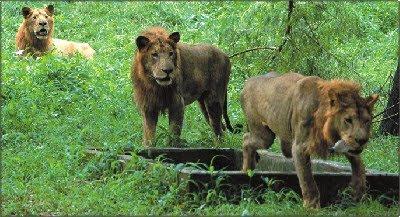حديقة حيوان دكا