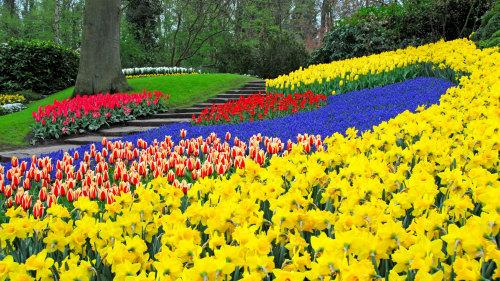 حديقة كويكنهوف