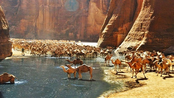 محمية وادي الجمال وجبل حماطة