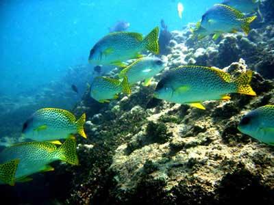 Mombasa Marine National Park