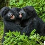 10 أسباب تجعلك تعشق السياحة في رواندا