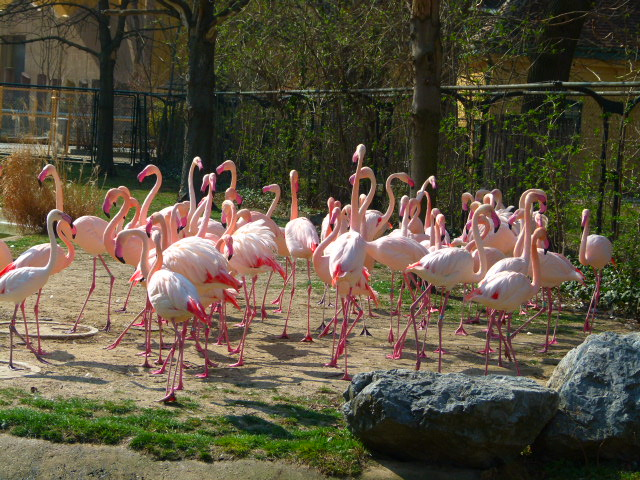 حديقة حيوان الشونبرون
