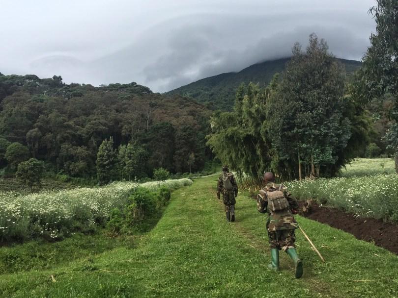 السفارى والرحلات فى رواندا