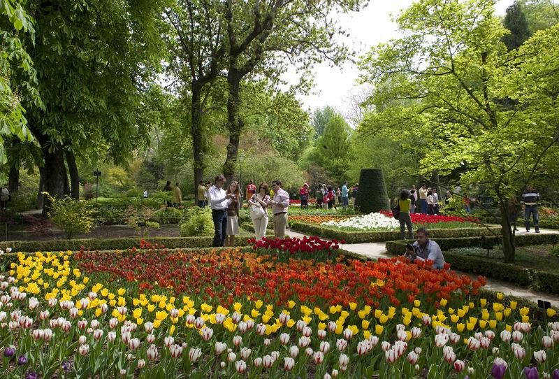 حديقة رويال بوتانيكو دى مدريد