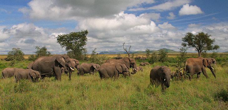 السياحة في افريقيا واخطارها