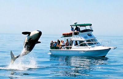 مشاهدة الحيتان