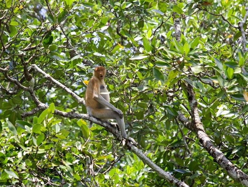 جولة فى غابات القردة