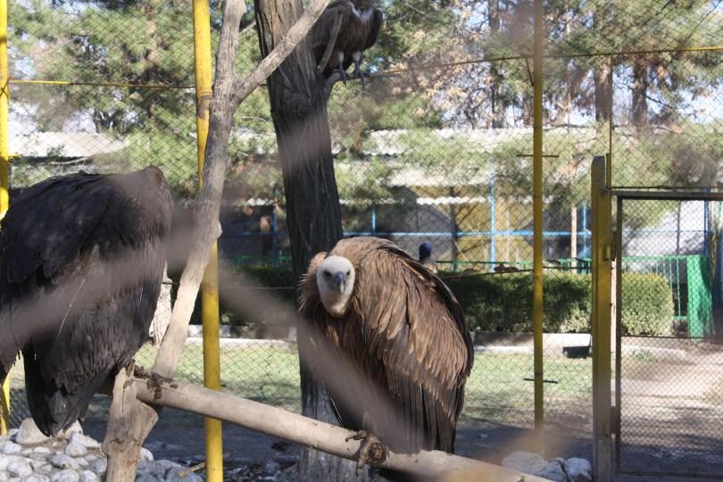 حديقة حيوان دوشنبه