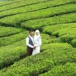 أجمل وجهات شهر العسل في ماليزيا