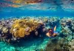 أجمل الوجهات السياحية لعشاق رياضة الغطس: تعرفوا على أروع مناظر الأحياء المائية التي تشبه عالم الخيال!