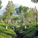 السياحة في كاندي سريلانكا وأجمل الأماكن السياحية التي تستحق الزيارة