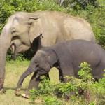 أفضل الأماكن لاكتشاف الحياة البرية في سريلانكا