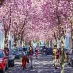 أفضل الأماكن السياحية في مدينة بون الألمانية