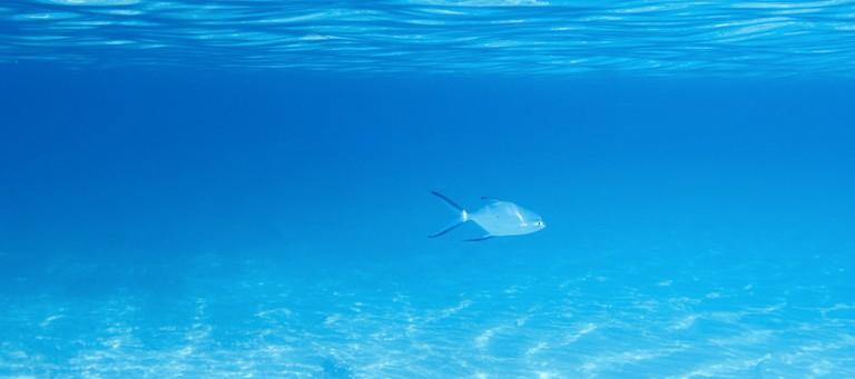 %D8%B4 - السياحة في فورمونتيرا اسبانيا وأفضل ما ينتظرك في جزيرة الطبيعة الساحرة
