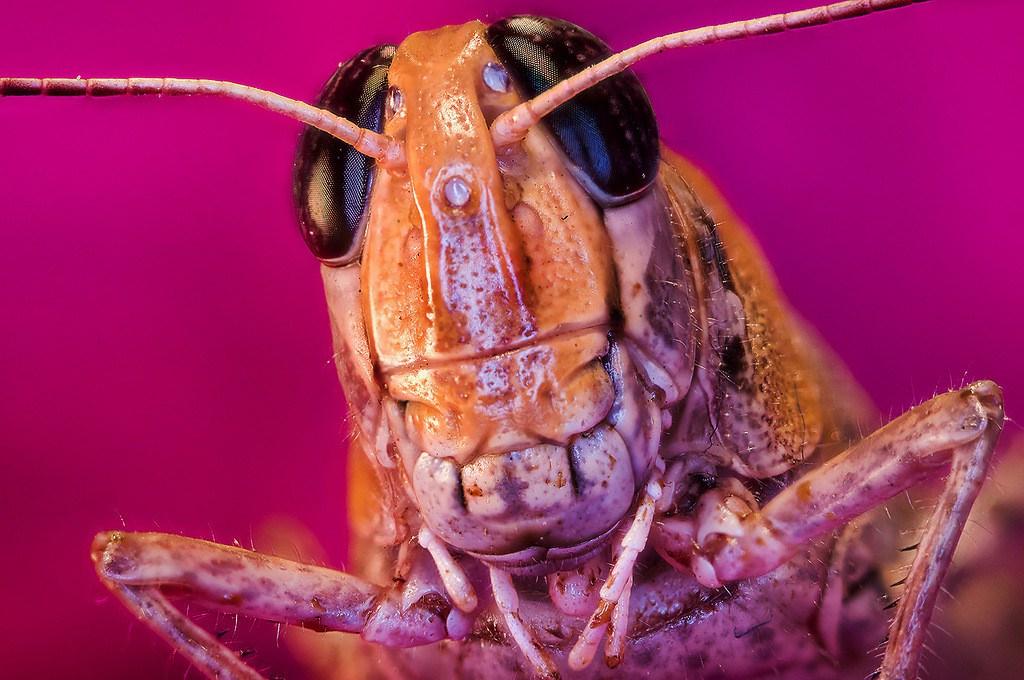صور مدهشة لحشرات تبدو كمخلوقات فضائية