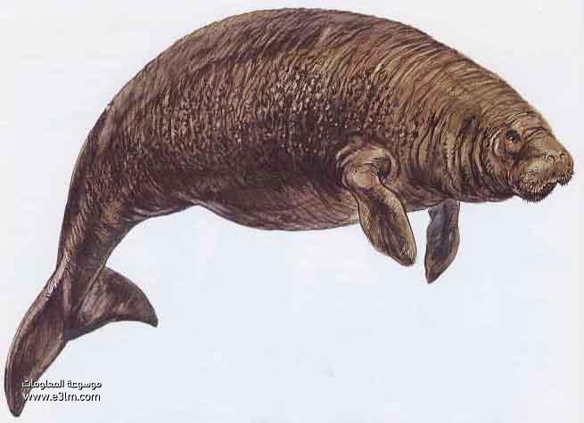 بقرة البحر ستيللر Steller's Sea Cow