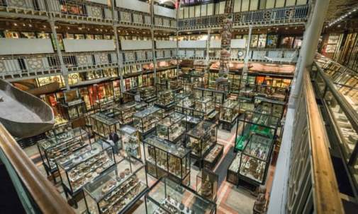 Pitt Rivers Museum Hires Syrian Refugees as Tour Guides