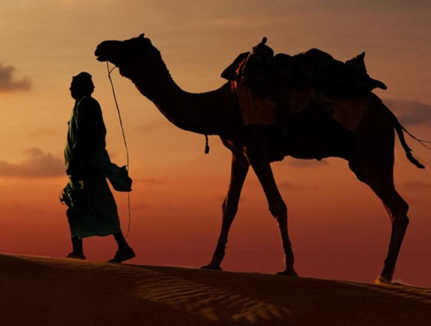 """The """"Ship of the Desert"""""""