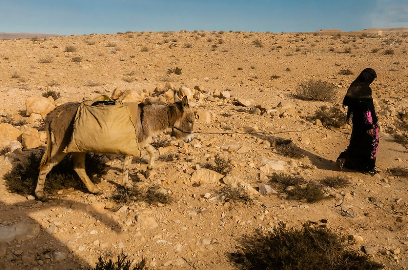 The Arab Bedouin of the Naqab: Myths and Misconceptions