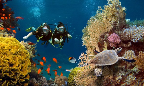 The Gradual Decline of Coral Reefs in the UAE; Efforts for Preservation
