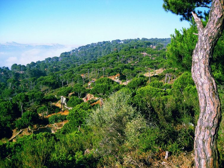 """'A Diplomat for the World and a Window into Lebanon's Beauty': A Book Review of """"The Heart of Lebanon"""" by Ameen Rihani with a New English Translation by Dr. Roger Allen"""
