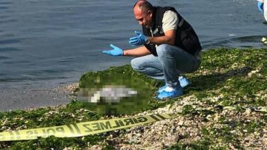 العثور على طفل حديث الولادة داخل كيس على ساحل بلكدوزو 4