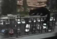 Photo of حيوان غير مألوف يظهر في شوارع دمشق