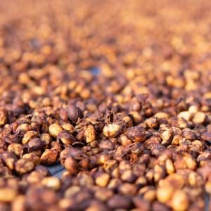 Arabica koffiebonen drogen met de Honey methode