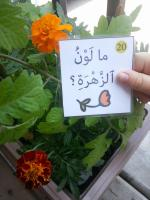 Arabic Nature Park unit Speaking cards