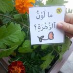 Arabic Nature Park unit Speaking cards