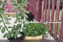 video My little garden - part 2