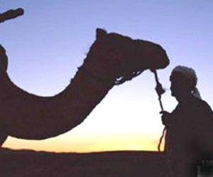 الرحلة العربية