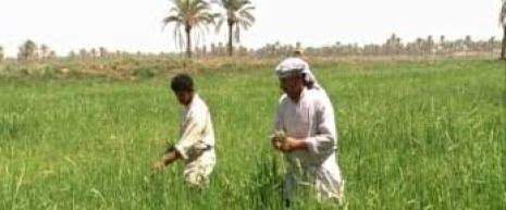الفلاح السعودي