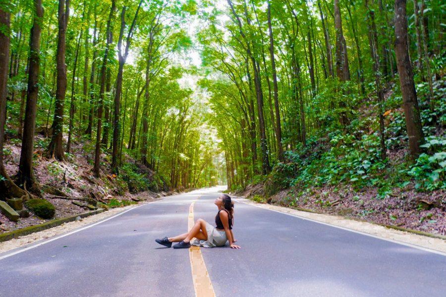 "ALT=""bohol travel guide manmade forest"""
