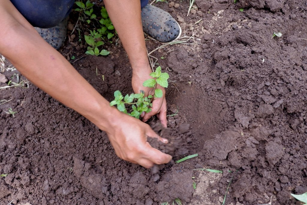 """ALT=""""tree planting experience to try at win farm"""""""