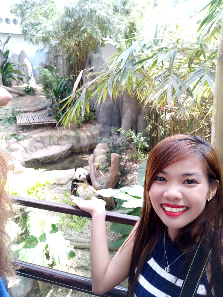 """ALT=""""singapore travel guide and with the real panda at safari"""""""