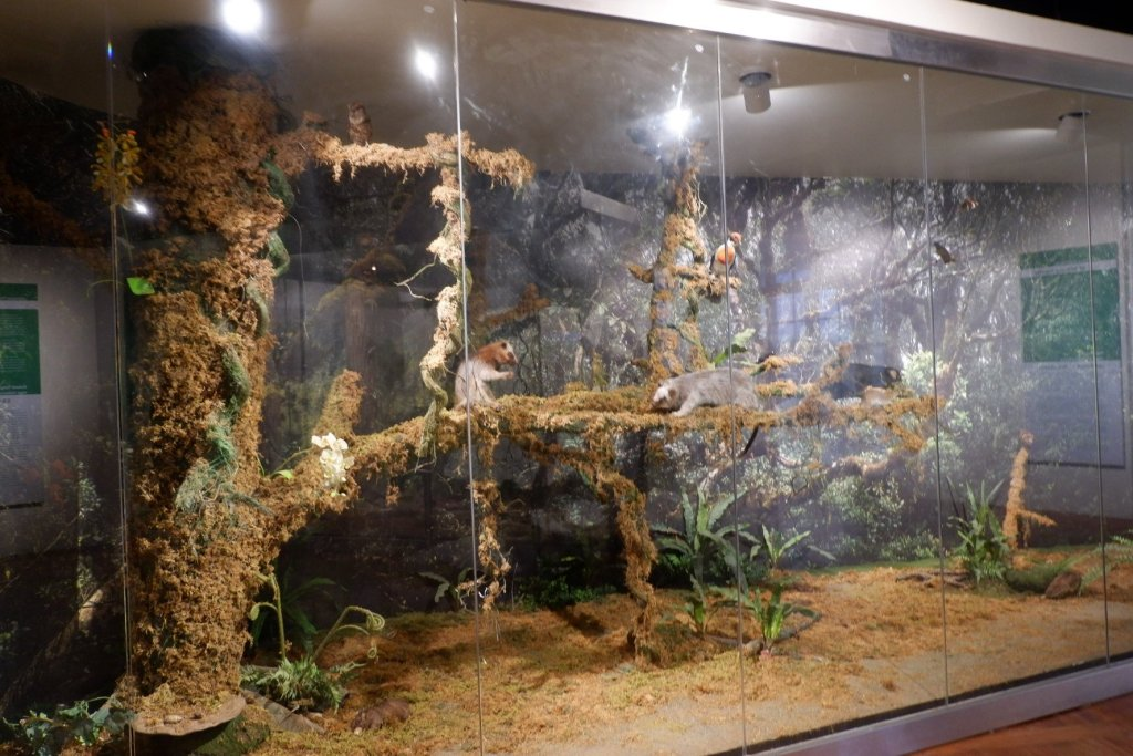 """ALT=""""national museum of natural history and the mossy forest"""""""